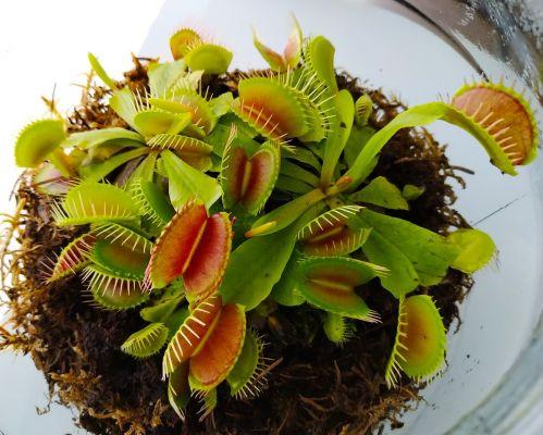 Colección de plantas carnívoras