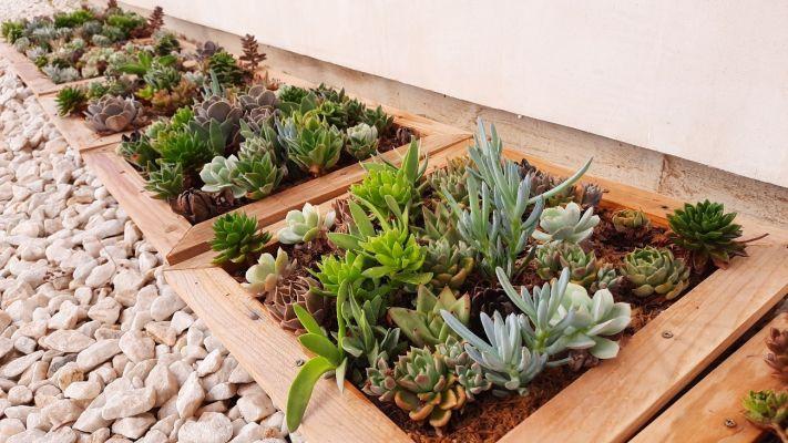Cuadros Vivos con Plantas Suculentas